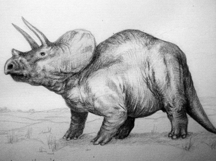 Triceratops via Wikimwdia Commons - gemeinfrei.